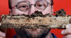 Termites' Digestive System Could Act as Biofuel Refinery, Purdue Researchers Say