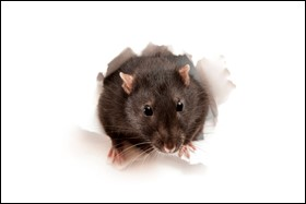 EPA Revises Its 2008 Rodenticide Risk Mitigation Decision for Professional Use Products