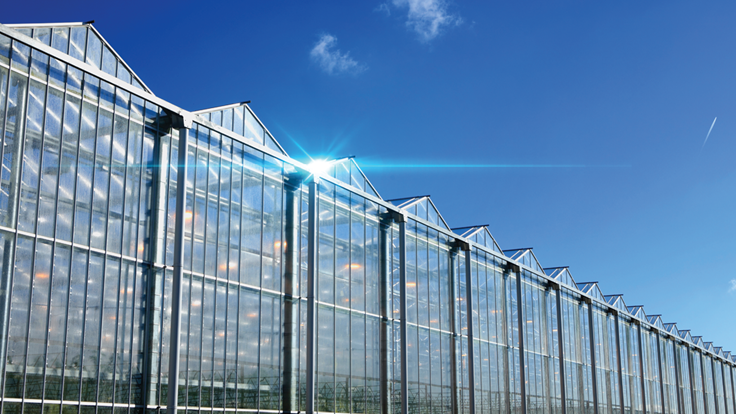 21 Tips from the Experts: How to Design a Greenhouse for Cannabis Cultivation