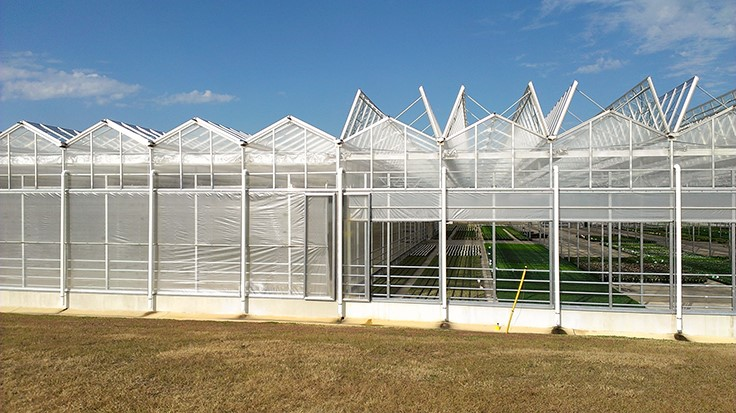 6 advantages to an open roof structure - Greenhouse Management