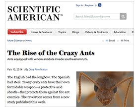 Tawny Crazy Ants Profiled in Scientific American