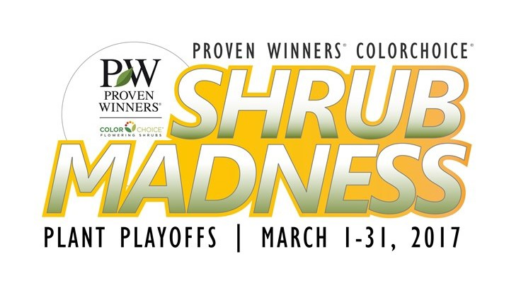 Pick your favorites: Shrub Madness 2017 begins