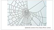 DNA from Spider Web Reveals the Species of Spider and Its Prey