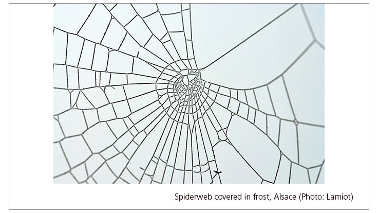 Millions of Spiders Coat an Australian Town With Silk
