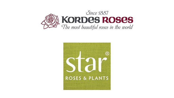 Star Roses and Plants launches Kordes website