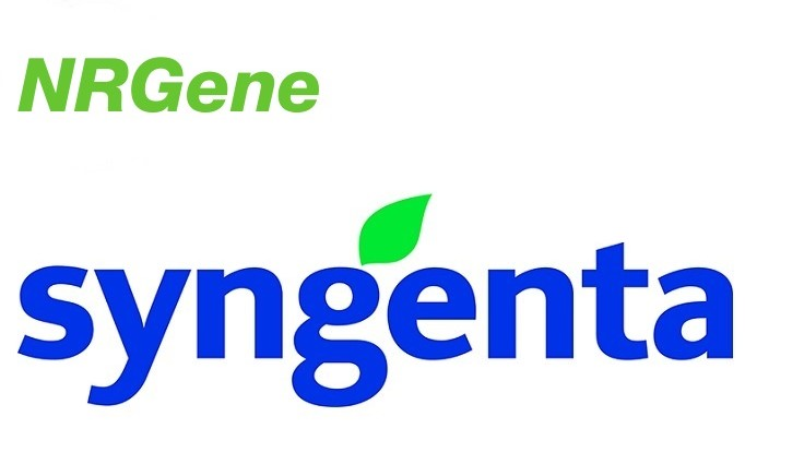 Syngenta and NRGene genome mapping to accelerate genetic research and breeding