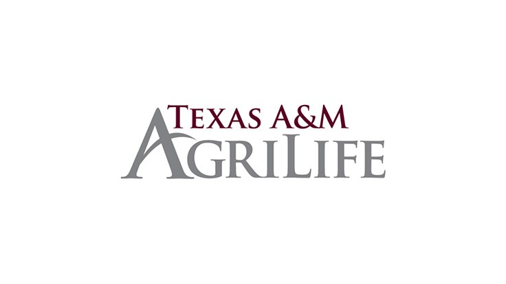 Texas A&M AgriLife vegetable breeding program to develop better cultivars