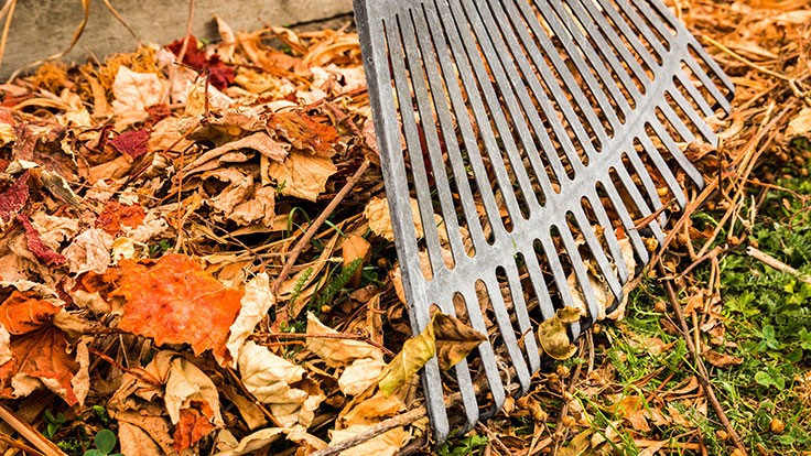Fall cleanup equipment favorites