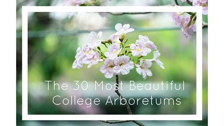/college-rank-30-most-beautiful-college-arboretums.aspx