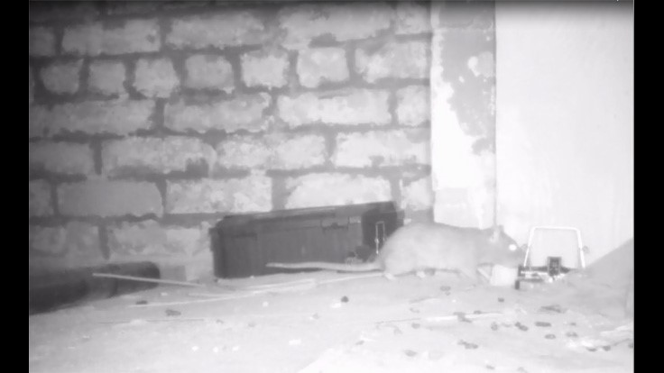 Video: Trap-Shy Rodents