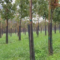 Rigid plastic mesh tree guards