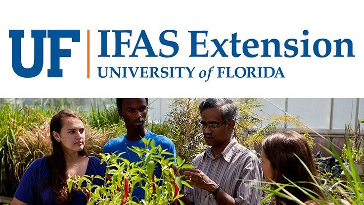 UF/IFAS professor and students breed better, tastier peppers