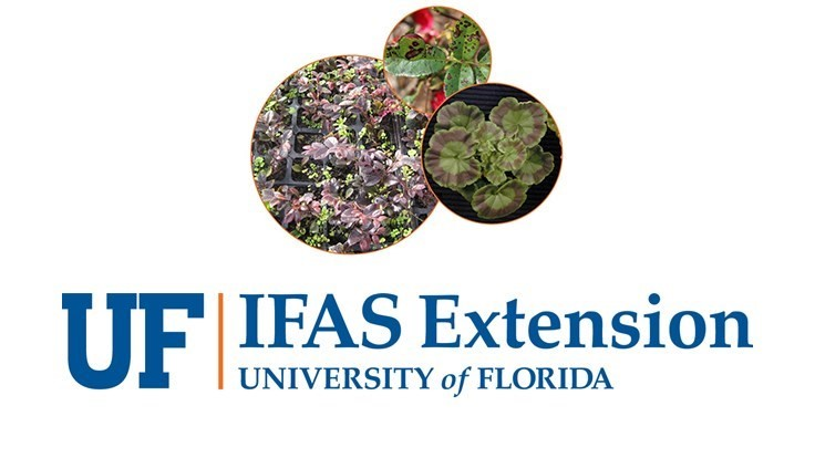 New plant breeder joins University of Florida