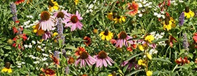 National Garden Bureau announces 2013 as Year of the Wildflower