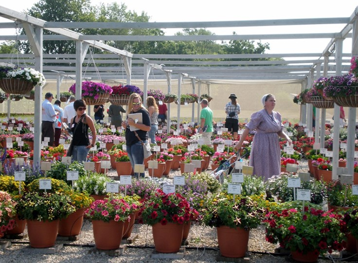 Plantpeddler announces 2017 Variety Day