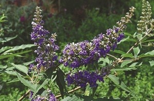 A new beginning for Vitex