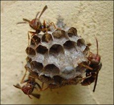 Flying Insects and Ants Top Summer Pests, Orkin Reports