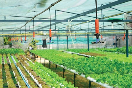 10 tips for recycling irrigation water - Greenhouse Management