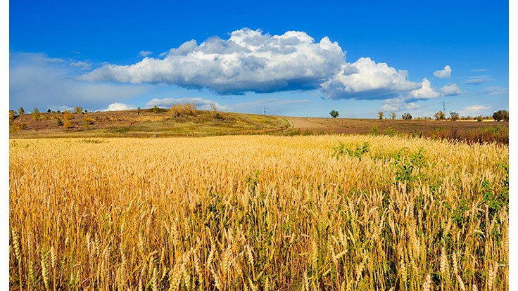 Climate Change To Require Land Use Changes to Sustain Global Food Needs