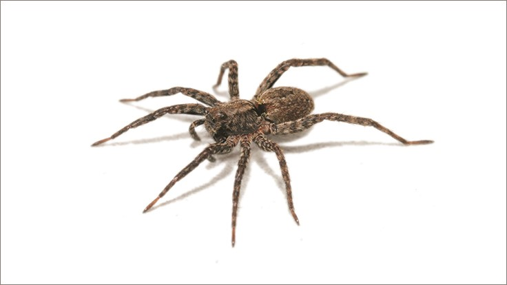 Recently Discovered Spider Named After Spider from Harry Potter