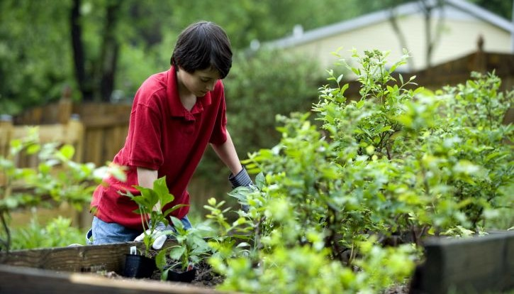 survey says more people are gardening even millennials