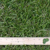 Bay Area cities considering limits on lawn sizes