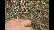 The basics of fighting crabgrass