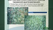 Seaweed extract and turf drought tolerance