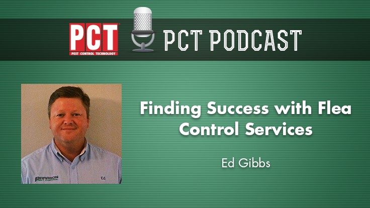 Finding Success with Flea Control Services