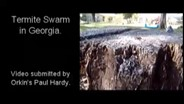 Video: Large Termite Swarm in Georgia