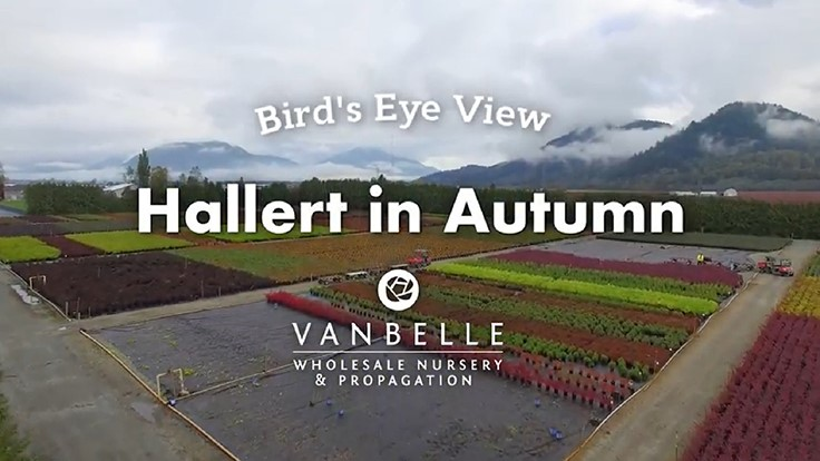 Van Belle Nursery uses drone to share bird's eye view