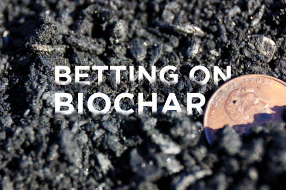 Betting on biochar