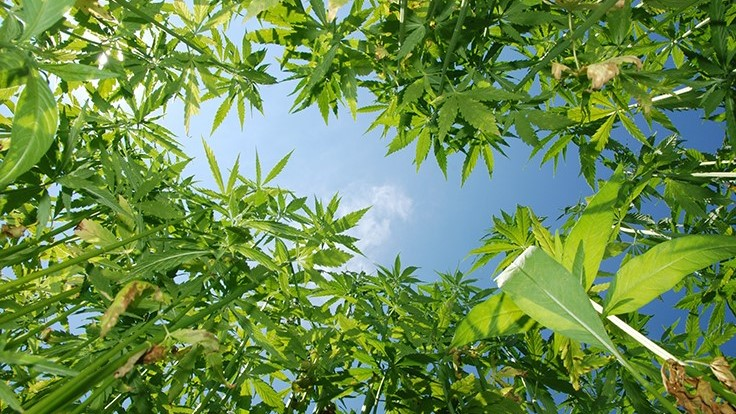 Bipartisan Hemp Cultivation Bill Introduced in U.S. Senate