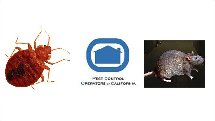 PCOC Survey: Rodent and Bed Bug Infestations on the Rise Throughout California
