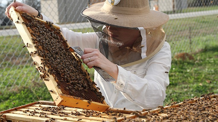 U.S. beekeepers lose four of every 10 managed colonies in 2017-18