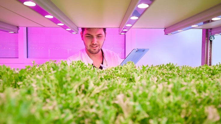 Influencing nitrate levels in leafy greens with LED grow lights