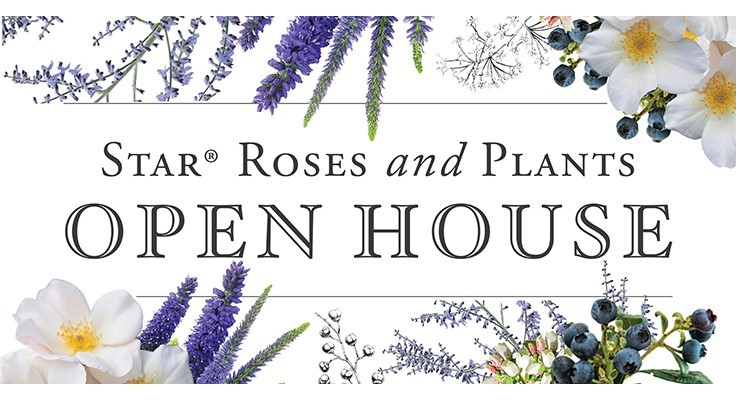 Star Roses and Plants hosts open house
