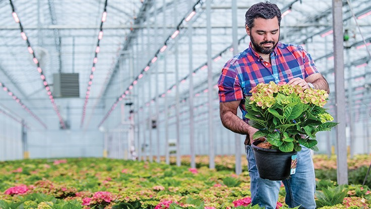 Van Belle Nursery shares 5 advantages of using LEDs