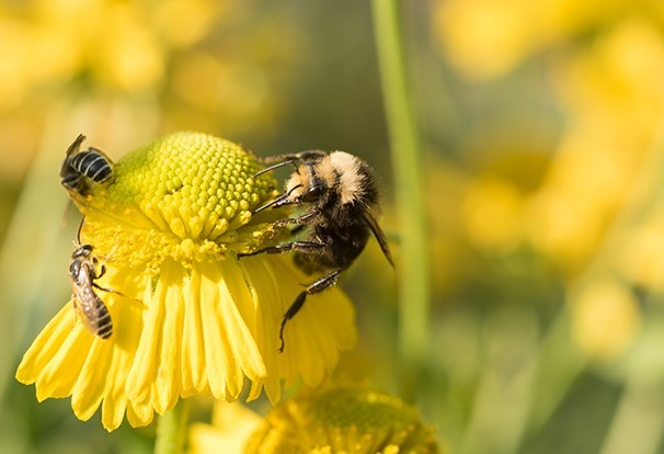 Syngenta hits the road to commemorate National Pollinator Week