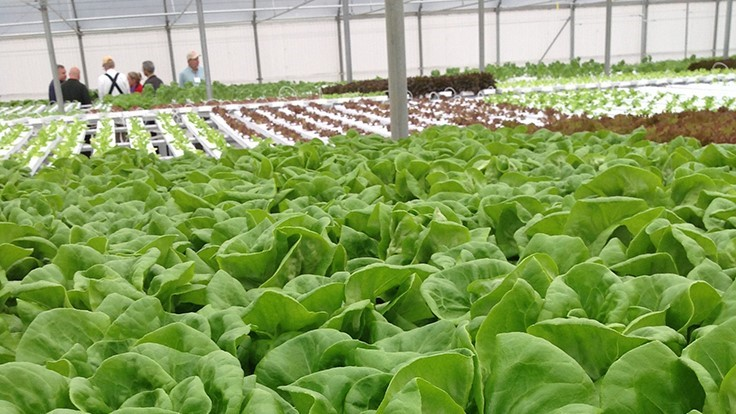 Griffin to host East Coast lettuce and herb production workshops