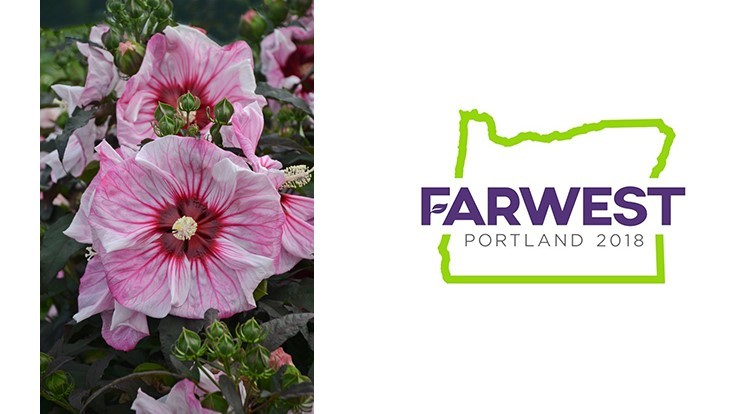'Cherry Choco Latte' Rose Mallow wins judges' honors at Farwest 2018