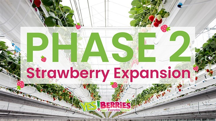 DelFrescoPure announces second phase of strawberry expansion