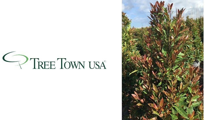 TreeTown USA receives patent for Japanese Blueberry
