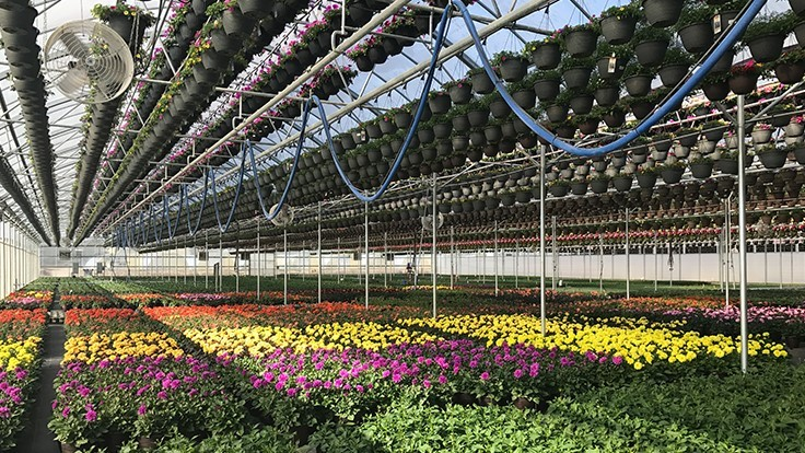 Pineae Greenhouses receives MPS-A certification