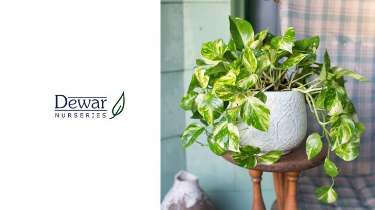 Dewar Nurseries launches new brand