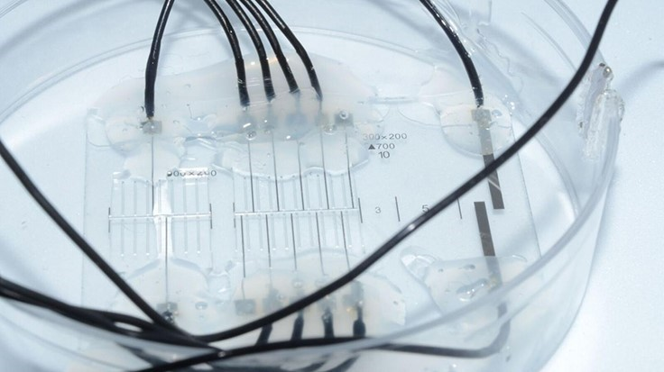 Nerve-on-a-chip, more effective neuroprosthetics
