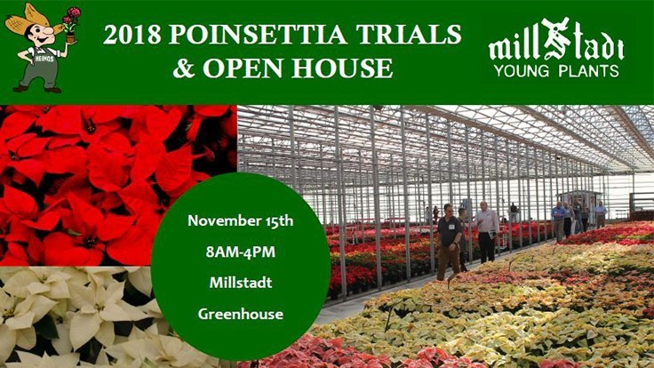 Millstadt Young Plants and N.G. Heimos Greenhouses set date for 11th Annual Poinsettia Trial & Open House
