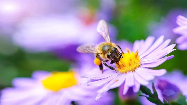 6 tips for supporting pollinator health