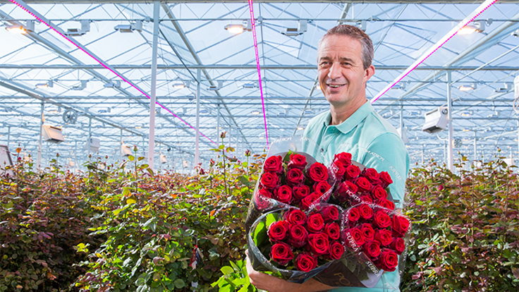 Porta Nova expands LED trial with dedicated rose spectrum
