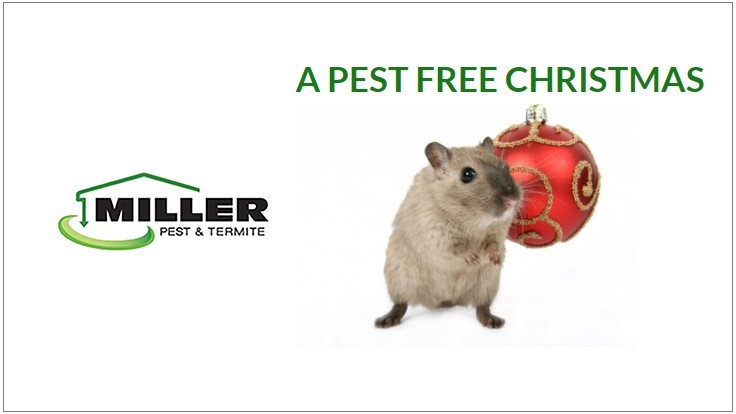 Miller Offering Pest Free Christmas to Families in Need
